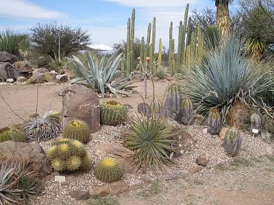 Cactus_garden