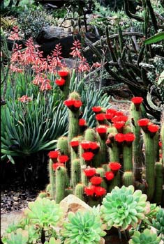 Mexican_garden