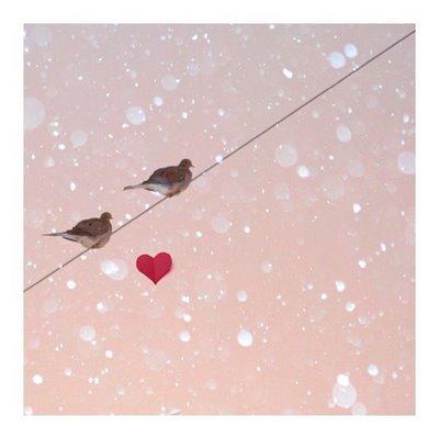 Avalentinebirdsas2squares_large